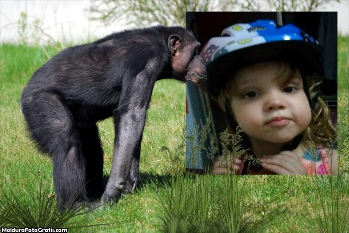 FotoMoldura Chimpanzé
