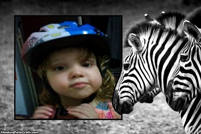 FotoMoldura Zebra