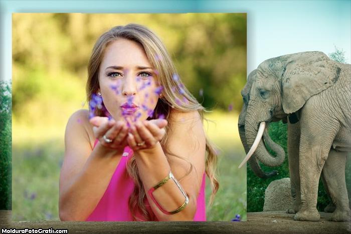 Moldura Elefante