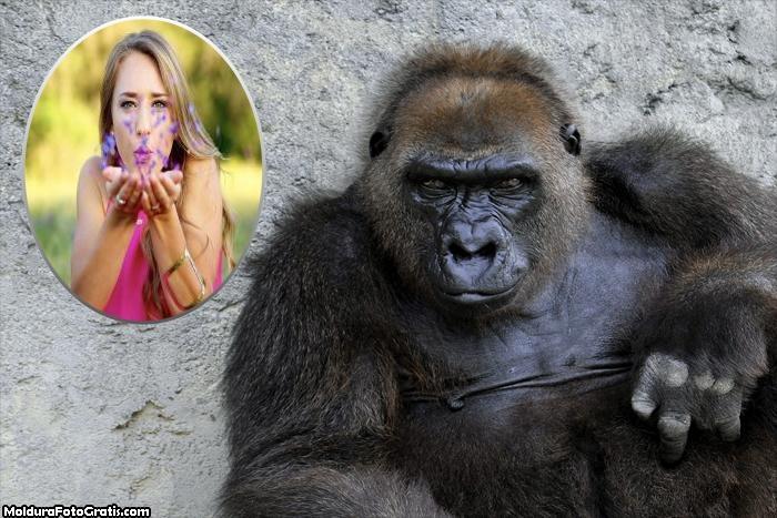 Gorila Moldura